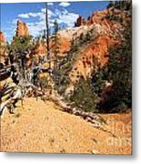 Bryce Canyon Forest Metal Print