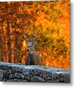 Buck In The Fall 01 Metal Print