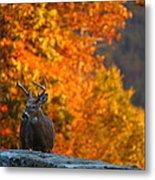 Buck In The Fall 02 Metal Print