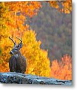 Buck In The Fall 04 Metal Print