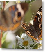 Buckeye With Eyes Metal Print