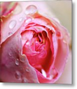 Bud Of Rose Wet Because Of Rain Metal Print by Glittering star. A whisper of trees. The noise of the town.