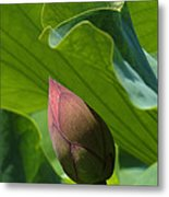 Bud Watched Over Dl050 Metal Print