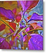 Budding Pink Metal Print