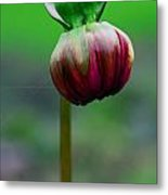Budding Potential  Metal Print
