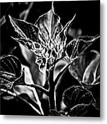 Budding Sunflower Metal Print