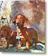 Buddy And Peaches On Top Of Rib Mountain Metal Print