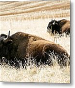 Buff And Friend 2 Metal Print