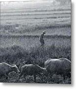 Buffalo And Monsoon Rain Metal Print by Anonymous