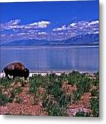 Buffalo And The Great Salt Lake Metal Print