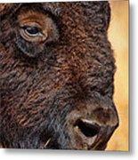 Buffalo Up Close Metal Print