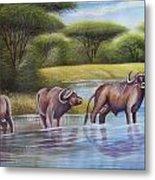 Buffalooes Watering Metal Print