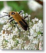 Bug And Flowers Metal Print