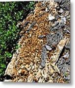 Bug Filled Bear Clawed Log Metal Print