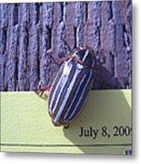 Bug Lands On My Paper Metal Print