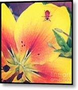 Bug On Lily Metal Print