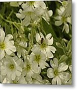 Bug On White Blooms Metal Print