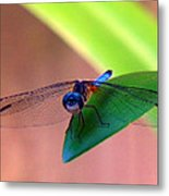 Bugeyed Metal Print
