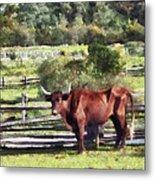 Bull In Pasture Metal Print by Susan Savad