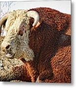 Bull It Is What It Is Metal Print