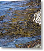 Bull Kelp Bed Metal Print by Bob Gibbons