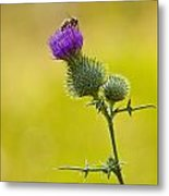 Bull Thistle With Bumble Bee Metal Print