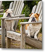 Bulldogs Relaxing At The Beach Metal Print