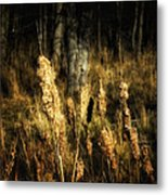 Bullrushes To Seed Metal Print