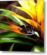 Bumble Bee Dart Frogs Metal Print
