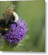 Bumble Bee II Metal Print