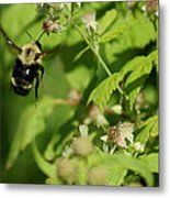 Bumble Flight Metal Print
