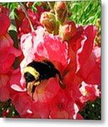 Bumblebee And Snapdragon Metal Print