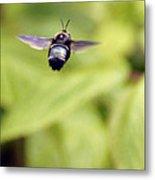 Bumblebee Midair Metal Print