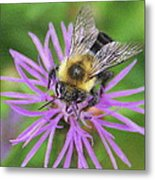 Bumblebee On A Purple Flower Metal Print