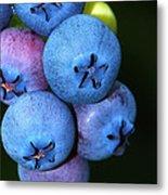 Bunch Of Blueberries Metal Print