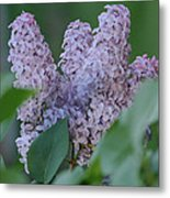 Bunches Metal Print