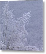 Burden Of Winter Metal Print