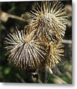 Burdock With Spiderweb Metal Print