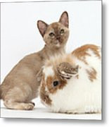 Burmese Kitten And Rabbit Metal Print