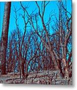 Burned Trees And The Sky Metal Print