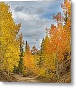 Burning Orange And Gold Autumn Aspens Back Country Colorado Road Metal Print