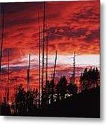 Burnt Trees Against A Sunset Metal Print