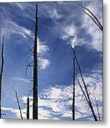 Burnt Trunks Of Black Spruce, Boggy Metal Print by Darwin Wiggett