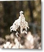 Bush In The Wind Metal Print