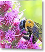 Busy As A Bee Metal Print by Becky Lodes