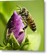 Busy Bee 2 Metal Print