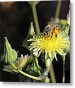 Busy Bee Metal Print