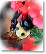 Busy Bee Metal Print by Maureen  McDonald