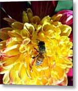 Busy Bee On Yellow Flower Metal Print