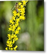 Busy Bee On Yellow Wildflower Metal Print